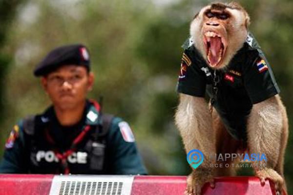 Штрафы за вождение в Таиланде