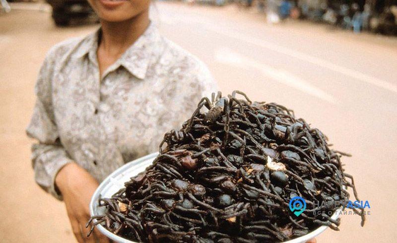 Как выращивают съедобных сверчков