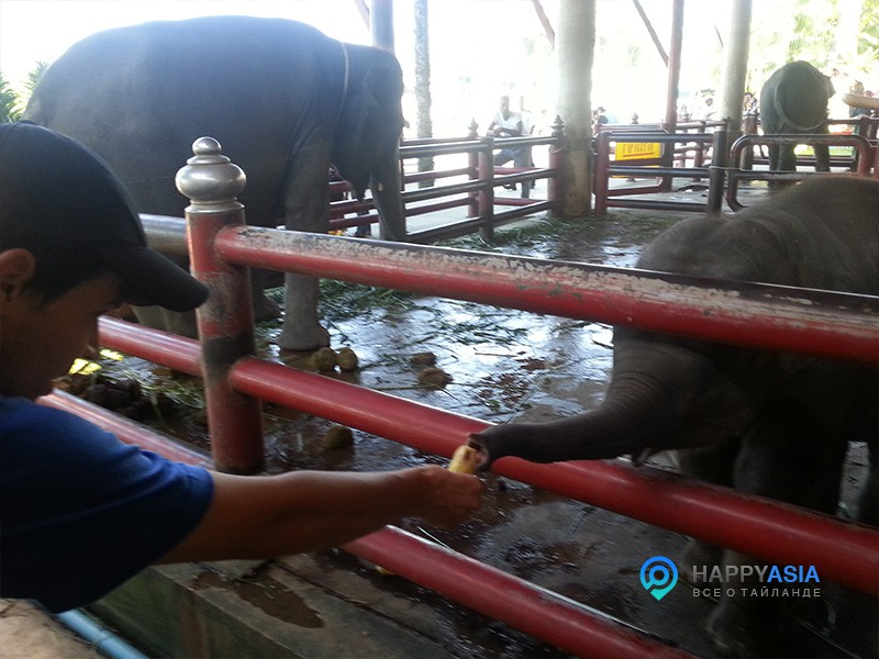Мини зоопарк Тайланд