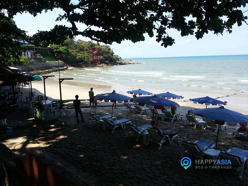 foto_chistogo_plaga_Pattaya