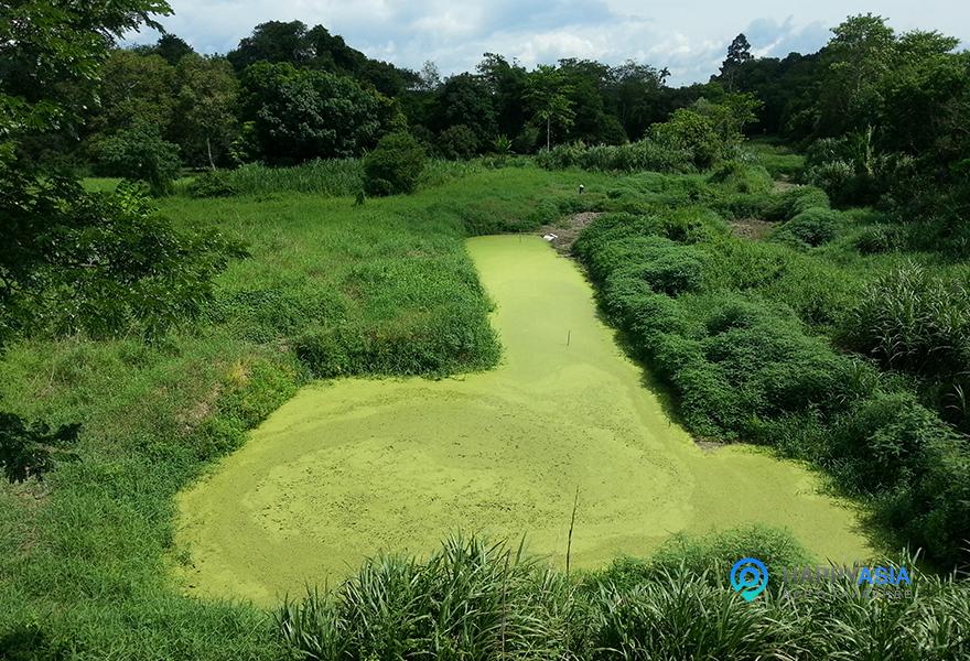 Природа-Тайланда