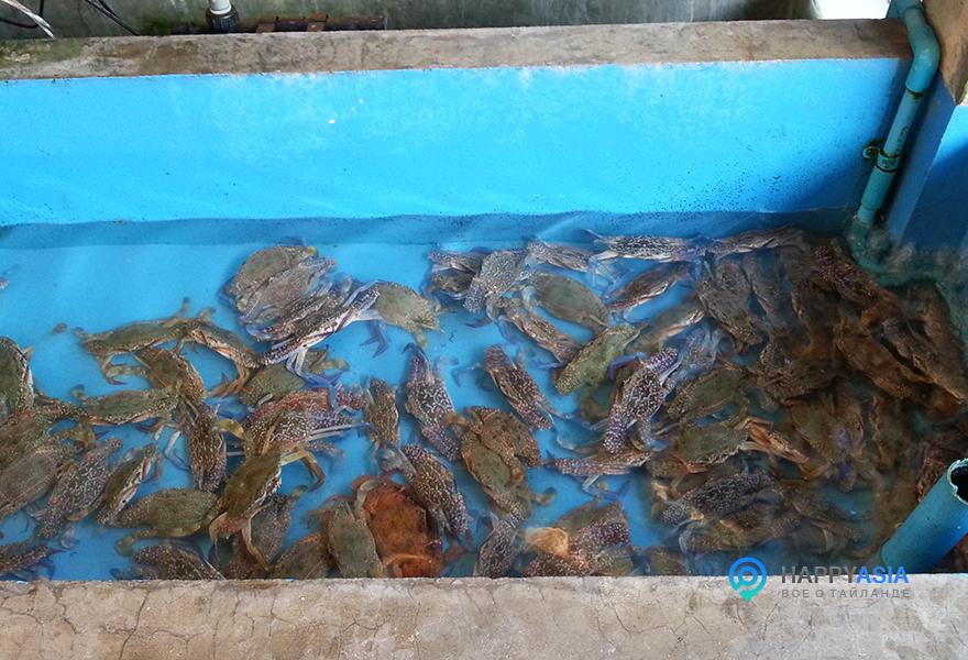 Ресторан-морепродуктов