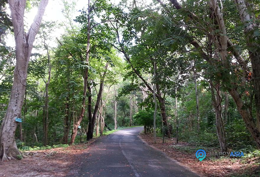 Nasionalniy_park_Pattaya