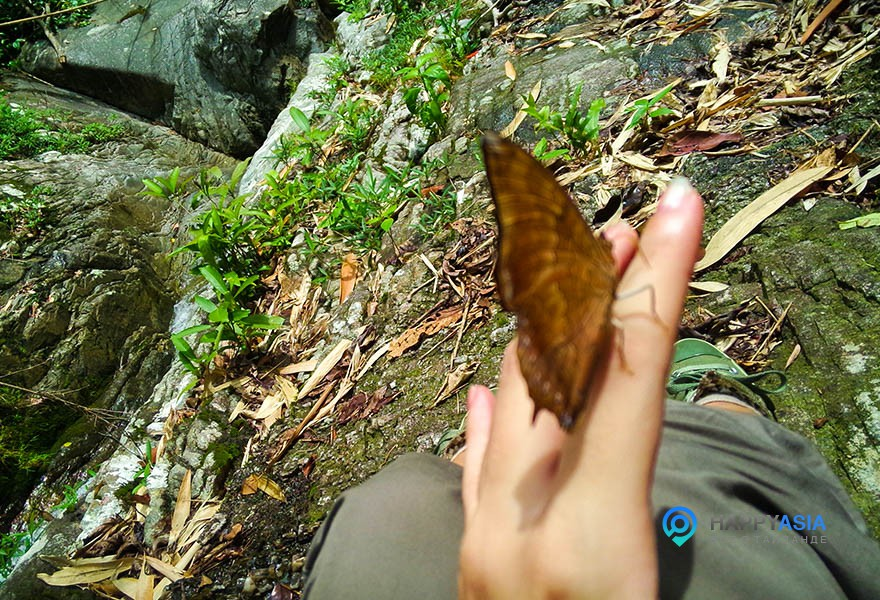 Бабочка-на-вас