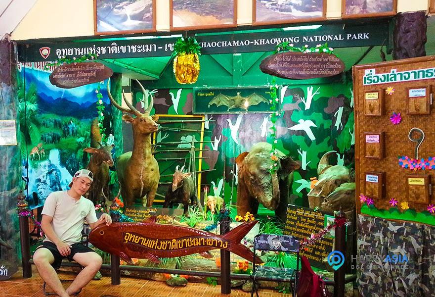 Дикие-животные-тайланда