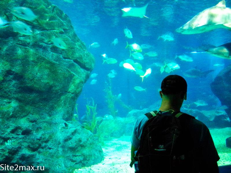 okeanarium_Bangkok-3