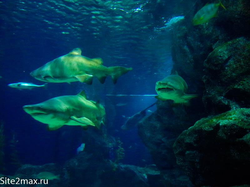 okeanarium_Bangkok-4