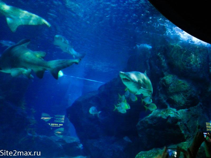 okeanarium_Bangkok-5