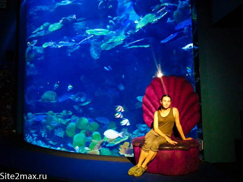 okeanarium_Bangkok-6