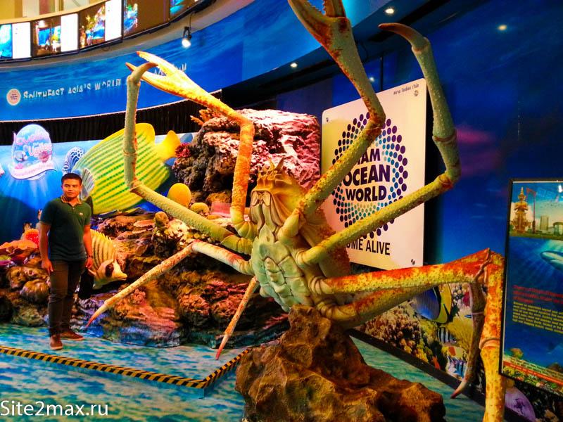 okeanarium_Bangkok