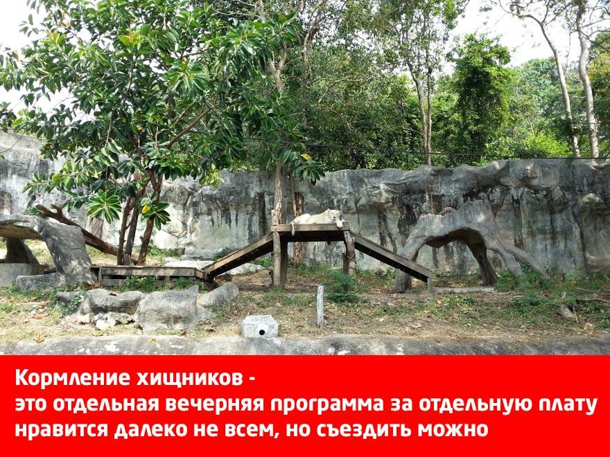 Кормление хищников в Кхао Кхео