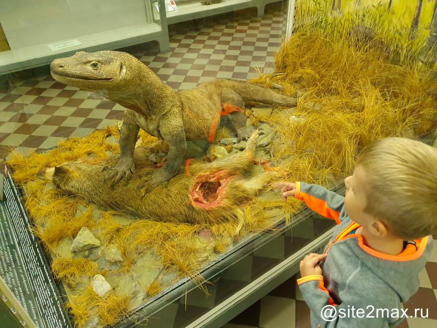Зоологический музей в СПб — отзыв о походе с ребенком